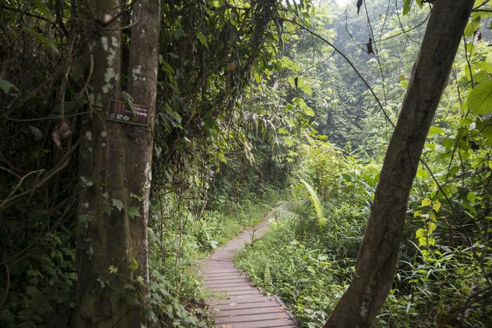 jungle trekking taman negara