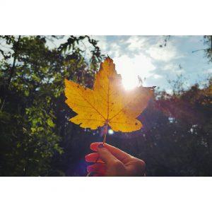 Autumn autumn leaf fall travelblogger dutchblogger wanderlust exploring instatravel traveladdicthellip