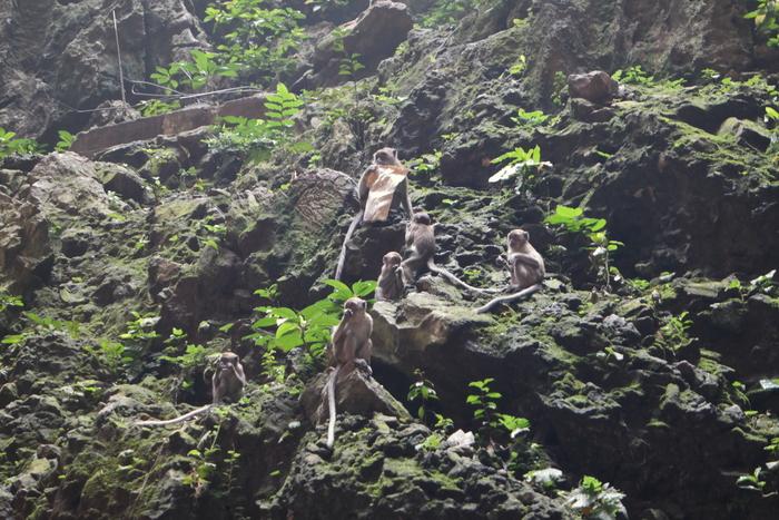 batu caves kuala lumpur maleisie malaysia monkeys