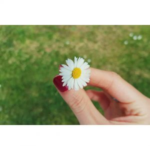 flower daisy blogger nature dutchblogger happiness flowerstagram travelblogger lifestyleblogger netherlandshellip