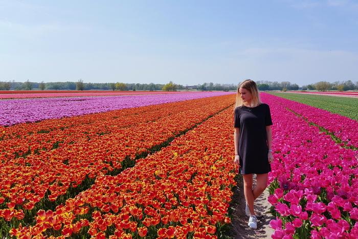 aroundsan bollenvelden tulpen tulips holland netherlands
