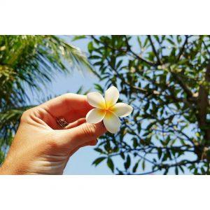 So much love for the Bali flower bali baliflower indonesiahellip