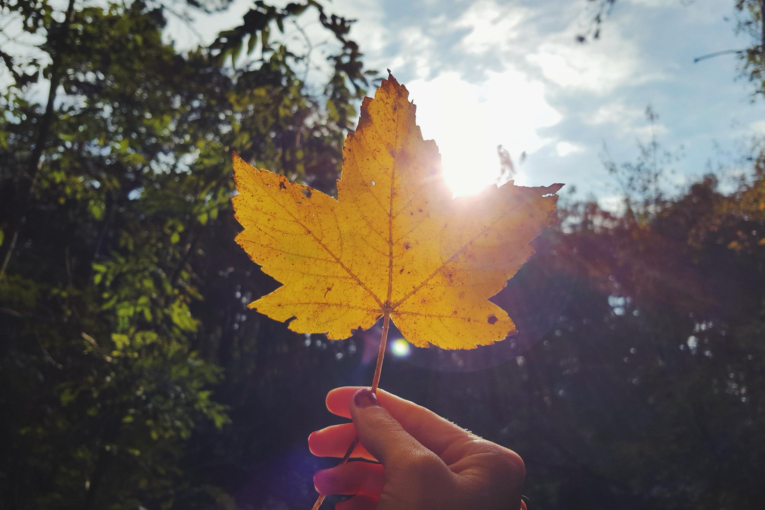 autumn fall herfst