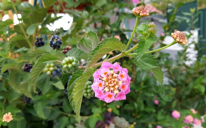 flower bloem bramen