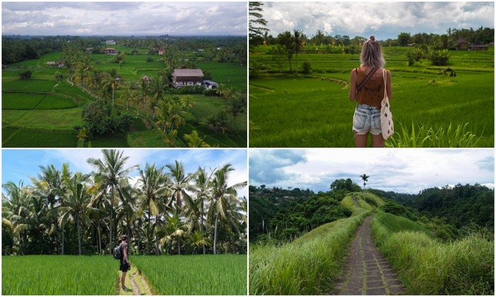 Bali | Ubud: Campuhan Ridge Walk & Subak Juwuk Manis