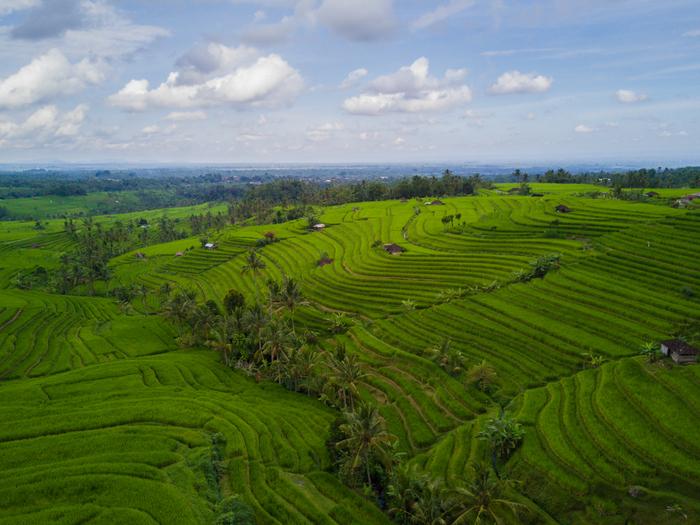 jatiluwih rice terrace rijstvelden bali indonesië indonesia drone