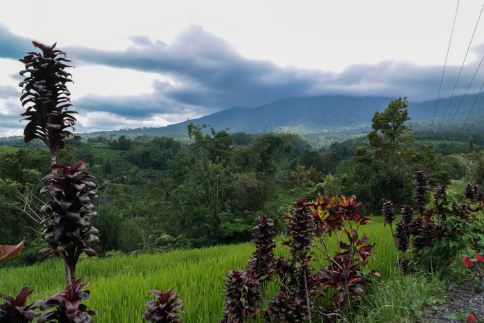 jatiluwih rice terrace rijstvelden bali indonesië indonesia