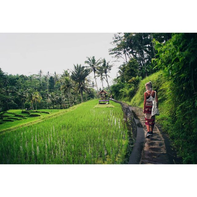 Exploring the rice fields and jungle  bali indonesia gunungkawihellip