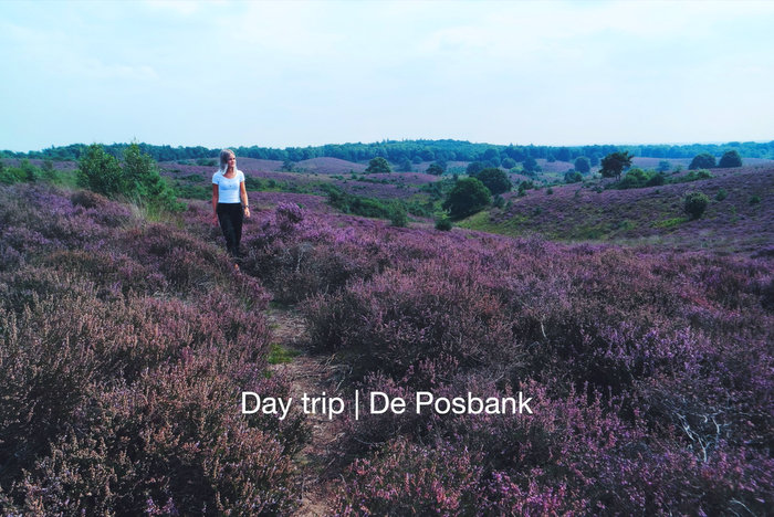 Video & foto's | Dagtrip naar De Posbank