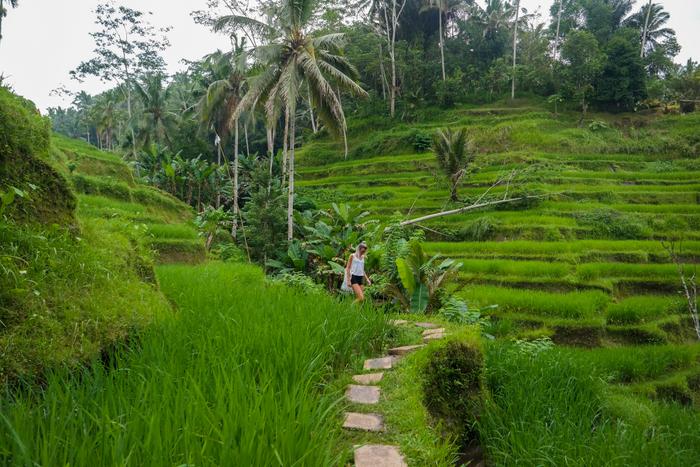 tegalalang bali indonesia indonesië rijstvelden ricefields