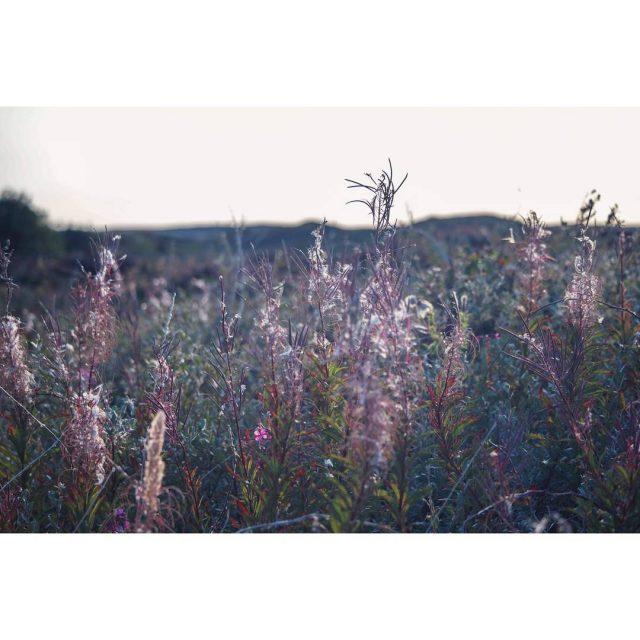 It seems a mysterious place texel mysterious netherlands dunes natureloverhellip