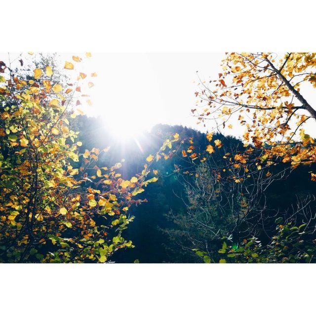 Sunny autumn days like this austria autumn oostenrijk herfst autumncolorshellip
