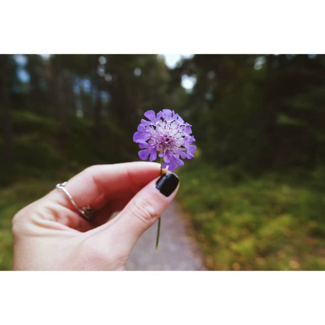 Pretty Austrian flower naturephotography naturelover instanature traveladdict travelblogger travelblog travelhellip