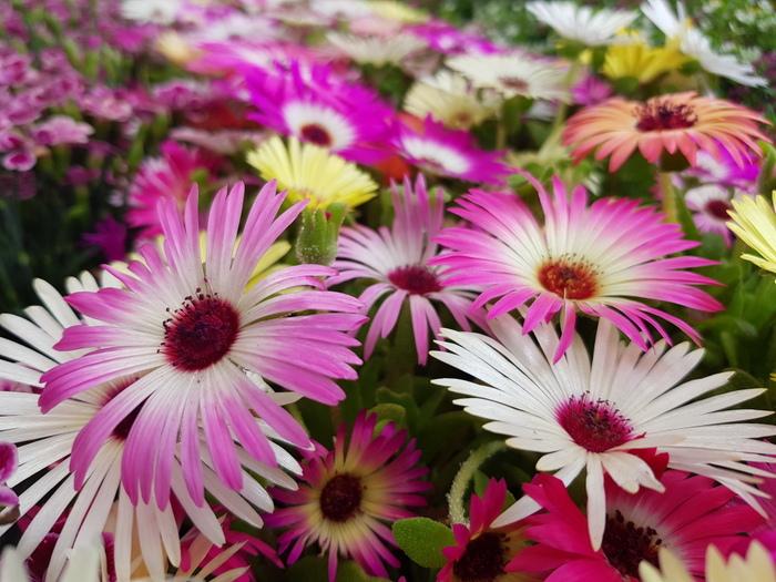 15 Leuke dingen om te doen in de lente