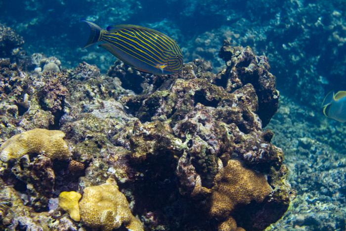 snorkeling nevis la digue seychelles