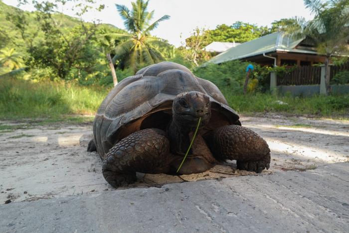 Anse Severe la digue seychelles seychelles turtle