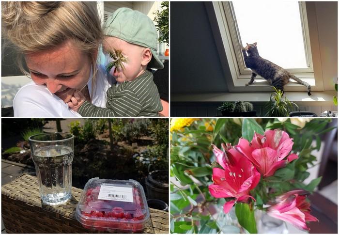 Photo Diary #202 | Veel zon, nieuwe doorverwijzing & acrobaat Suzie