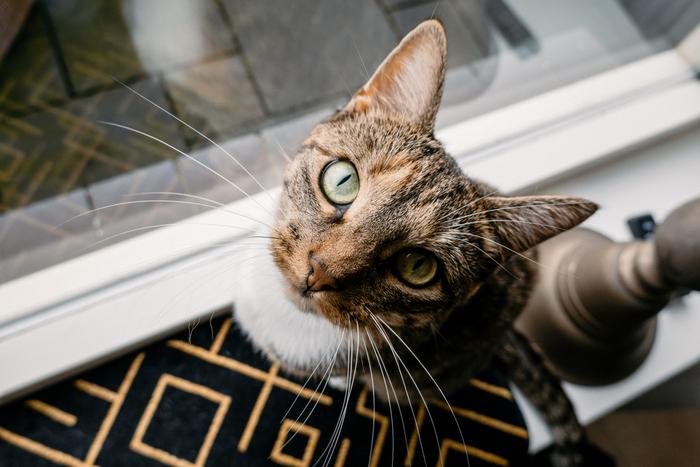 Catmom | De ochtendroutine van Suzie