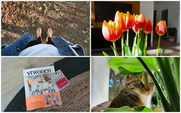 Photo Diary #242 | Tv-dag, vrolijke bloemen & avondzonnetje