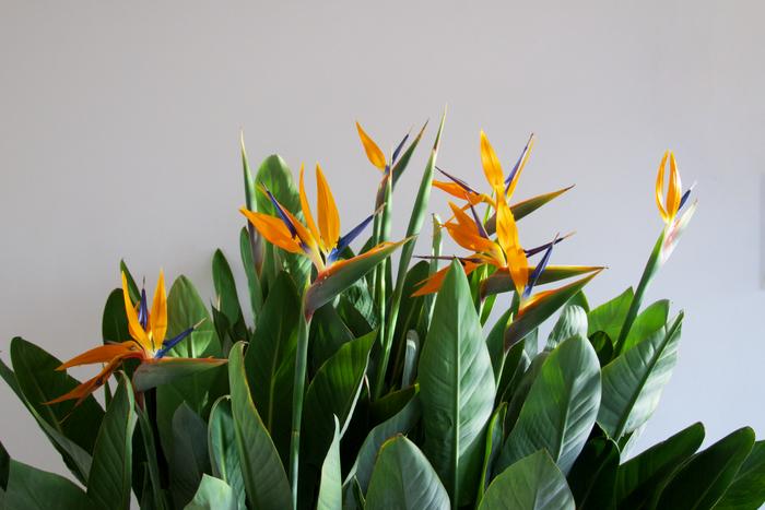Hoe hou je kamerplanten in leven? 10 Tips van deze plantenfreak!